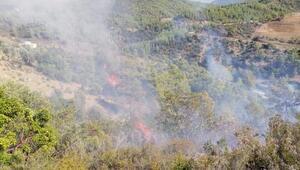 Gazipaşada bu yıl 8 orman yangını çıktı