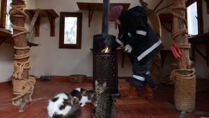 Hayvan Barınağındaki kediler, soğuk kış günlerini villalarında geçiriyorlar