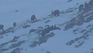 Yaban keçisi avına 23 bin lira para cezası