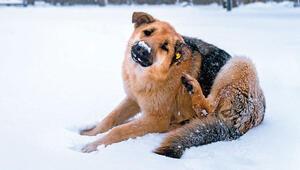 Hayvanseverin 5 kış ödevi