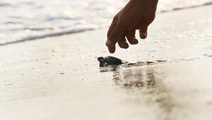 537 bin yavru denizle buluştu