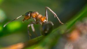Rüyada karınca görmek ne anlama gelir Rüyada karınca yuvası ve sürüsü görmenin anlamı
