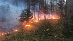 Uludağda orman yangını çıktı