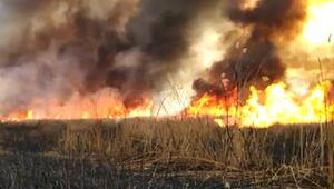 Eber Gölündeki sazlık alanda yangın