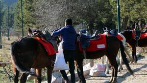 Abantta karantinaya alınan atların sahiplerinde ruam bulgusuna rastlanmadı