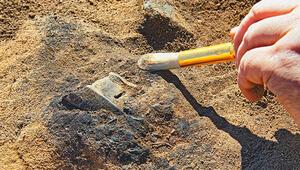 Denizlide 8 farklı hayvan türüne ait fosil bulundu