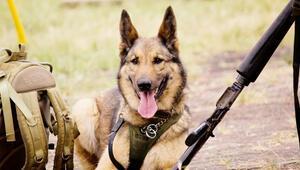 Mısır ve Ürdün'e köpek yasağı