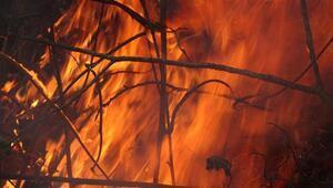 Son dakika.. Bakanlık: Trabzonda 55 orman yangınından 38i söndürüldü