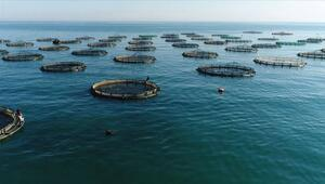 Türkiyenin çiftlik balığı üretimi 10 yılda ikiye katlandı
