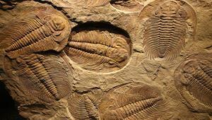 500 bin yıllık fosilleşmiş beyin şaşırttı