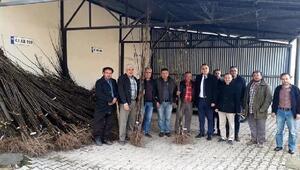 Simavda çiftçilere toplam 4 bin ayva fidanı dağıtıldı