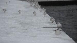 İstanbula kar ne zaman yağacak MGMden en son bilgiler