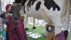 Gümüşhanede akıllı inek projesine ilgi