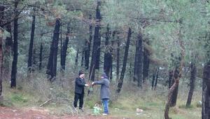 İstanbul ormanlarında alarm, uzmanlar uyardı