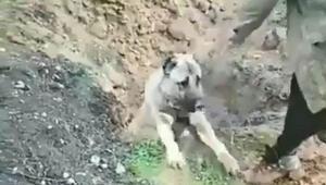 Son dakika haberi... Bu görüntü sosyal medyayı ayağa kaldırmıştı O köpeğin sahibi serbest kaldı