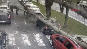 Son dakika... İstanbulda turuncu alarm Ağaç insanların üzerine devrildi, araçlar ezildi