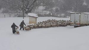Kar ve tipi nedeniyle koyun sürüsüyle yaylada mahsur kaldılar