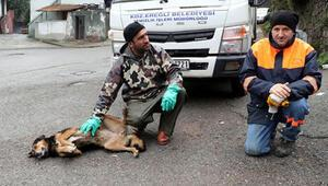 Temizlik görevlilerinin sokak köpeği ile kurduğu dostluk