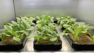 LG, şimdi de evler için sebze ekim aleti geliştiriyor