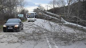 Edirnede fırtına ağaç devirdi