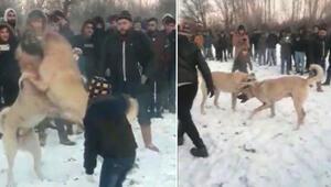 Köpek dövüşünü WhatsApp üzerinden organize etmişler