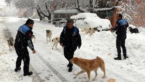 Sokak hayvanlarına yiyecek verildi