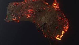 NASAnın uydu fotoğraflarına göre Kanguru Adasının üçte biri yandı