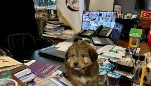 Kırklarelide yavru köpeğe belediye sahip çıktı