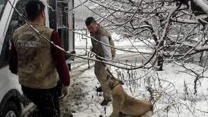 Yaralı köpeğe yardım eli