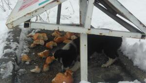 Akşehir Belediyesi, sokak hayvanlarını besliyor