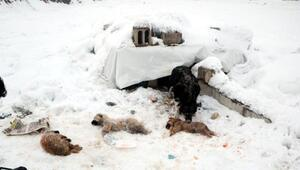 Yüksekovada dondurucu soğuklar: 3 yavru köpek öldü