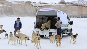 Niğde'de sokak hayvanları için ambulans