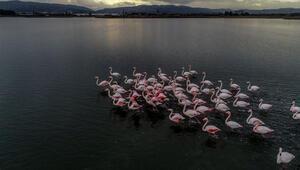 Hersek Kuş Cenneti flamingolarla bir başka güzel