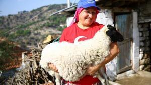Sakız koyunları üreticiyi memnun etti