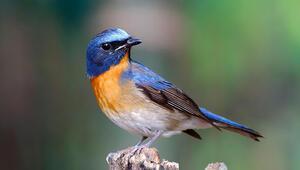 Endonezyada 10 yeni kuş türü keşfedildi