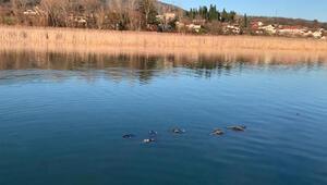 Sapanca Gölünde hayalet ağ katliamı
