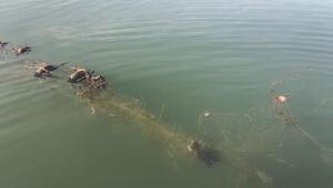 Sapanca Gölünde hayalet ağ nedeniyle ördek ve balıkların ölmesine inceleme