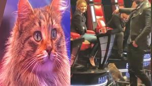 O Ses Türkiye yarışmasında kedi sürprizi