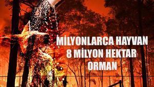8 milyon hektar orman-366 bin insan