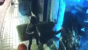 Maskeli hırsızlardan 2si yakalandı