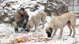 Sokak hayvanları için doğaya yiyecek bırakıldı