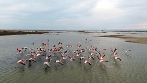 Gala Gölü flamingolarla renklendi