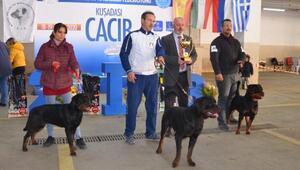 Köpek ırkları Kuşadasında yarıştı