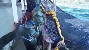 Tam 3 bin kasa Büyük tekne hamsiyle dolup taştı...