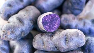 Bu rengini ilk kez göreceksiniz Normal patatesten 10 kat daha fazla…