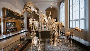 Hessen Eyalet Müzesi 200 yaşında