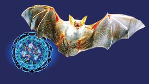 Yarasa çorbası nedir Koronavirüsü yarasa çorbası tarifi nedeniyle mi bulaşıyor