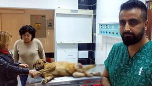 Çöplükte bulunan yaralı köpek tekerlekli sandalyeyle yaşama tutunacak