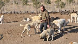 Banka müdürü, kendini sokak köpeklerine adadı
