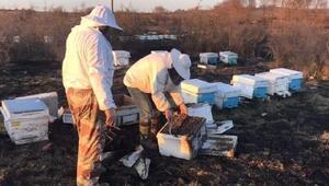 Çanda otluk yangınında 30 arı kovanı yandı